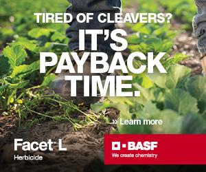 BASF Facet-L