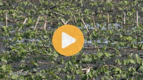 Modes of action in fungicides