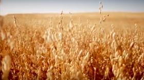 Story of oats