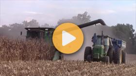 Harvesting corn with John Deere and Kinze equipment