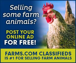 Farms.com Classifieds Farm Animals