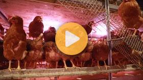 Egg farming: Off the grid