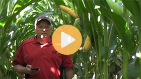 Corn crop assessment tour