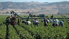 GettyImages-seasonal farm workers