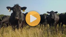 Building better beef