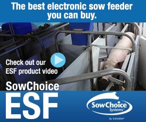 SowChoice feeder