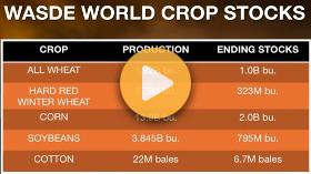 Wheat Market Update