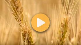 Grain Market Update