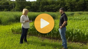 Nitrate toxicity in forage