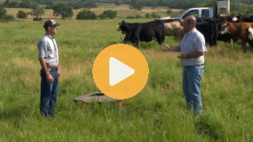 Cattle and mineral supplements