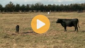 Leasing ranch equipment