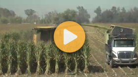 Using a New Holland forage harvester