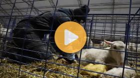 Sheepishly Me: saving my first set of quads