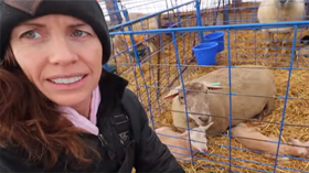 Sheepishly Me: the end of lambing results