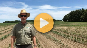 Cover crops in sixty inch corn