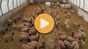 Sheep farm vlog