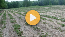Diagnosing strawberry root pests