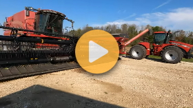 Wheat planting and bean harvest