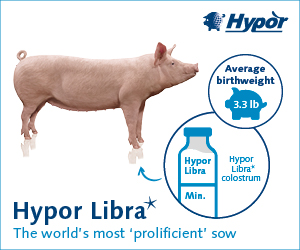 Hypor 2020