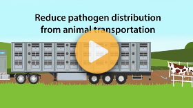 Improve biosecurity and welfare of animals during transportation