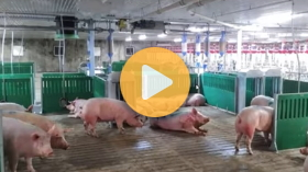 How an Ontario pork producer gets it done?