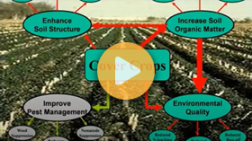 Terminating Cover Crops