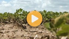 Mid-season Crop Assessments