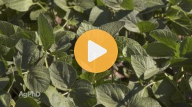 Plants and Carbon Dioxide