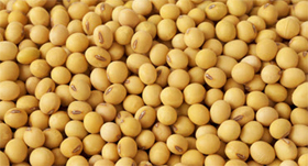 U.S. Soybeans Providing Comfort for Health Care Workers